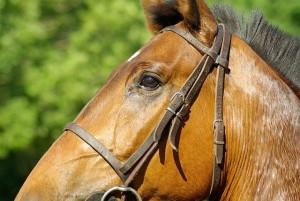 Pferd Reitbeteiligung gesucht